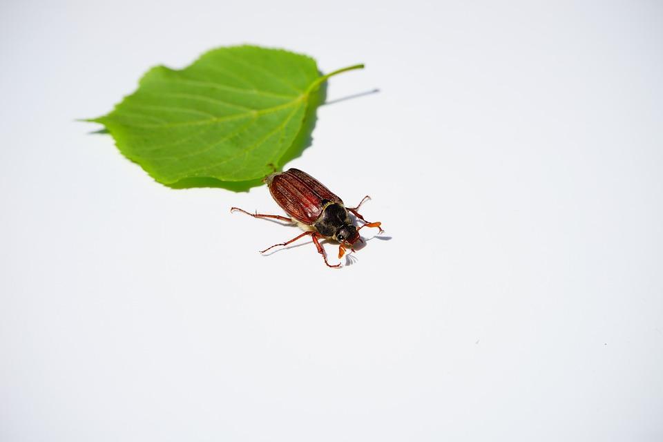 foglia-e-insetto